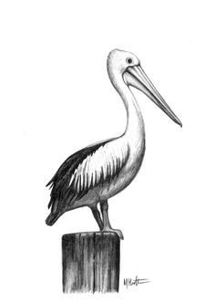 pelican drawing for mum by me, max hamilton