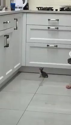 Cute Little Animals, Cute Funny Animals, Funny Cute, Super Funny, Cute Animal Videos, Funny Animal Pictures, Animal Pics, Cute Cats And Kittens, Kittens Cutest