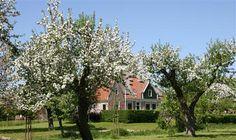 #Unesco #Werelderfgoed de #Beemster met prachtige boomgaarden, boerderijen, forten en kerken. Lees meer: http://www.vvvbeemster.nl/