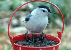~Attract more birds to your yard: We have some tips on the best birdseed to feed backyard birds!~   birdsandblooms.com