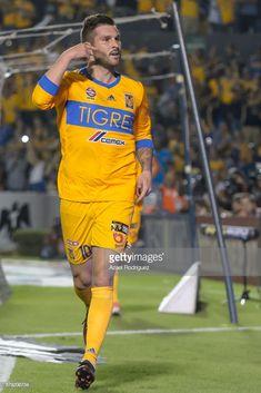 Tigres Uanl V Leon Playoffs Torneo Apertura 2017 Liga Mx Stock Photos and  Pictures 227633349