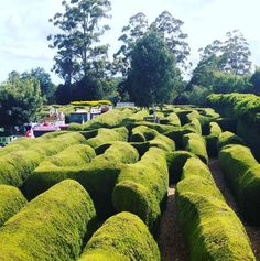 Get lost in an IRL hedge maze. | 27 Things You Didn't Know You Could Do In Tasmania