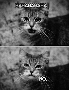 30 funny animal captions - part 3 (30 pics)