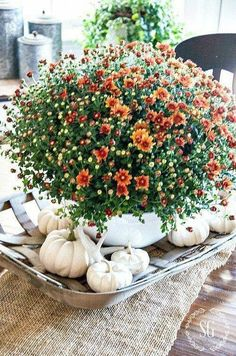 Autumn decor. I'm liking the trend towards lighter colors for fall.  Here in CA it blends better with our fall environment.