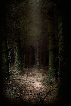 This really captures the feel of the dark wood in which Myran found the old broken knife handle. -The Tor Trilogy-