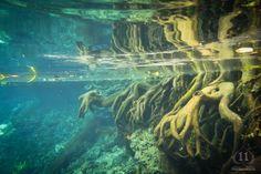 Roots underwater