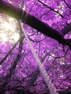The Purple Power Stunning Photography Feature