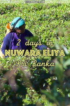 2 days in Nuwara Eliya - Hill Country of Sri Lanka - Hearth of Tea Production