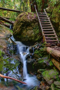 Always wanted to hike here when I lived in CA. Next month, I finally will!! -> Steep Ravine Falls- Mt. Tamalpais