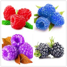 Bonsai rare raspberry seeds organic fruit seeds green red blue purple black raspberry seeds for home garden plant easy to grow ** This is an AliExpress affiliate pin. Find similar products on AliExpress website by clicking the VISIT button Bonsai Seeds, Tree Seeds, Home Garden Plants, House Plants, Flower Seeds, Flower Pots, Fruit Bio, Growing Raspberries, Raspberry Seeds
