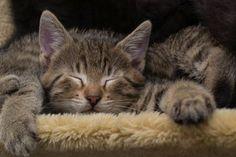 """#Geld ist ein wichtiges Thema, denn #Sabrina hat keine Organisation, keinen #Verein, der sich um die #Finanzen kümmert. #Finanzielle #Unterstützung nimmt sie am liebsten in Form von #Gutscheinen von #Tierfutterversandhäusern oder indem man bei ihrem #Tierarzt """"einzahlt"""". Will heißen, dass man einen belieben Betrag dem Tierarzt überweist, mit dem Hinweis, dass das Geld für die #Katzenhilfe #Graz sein soll."""