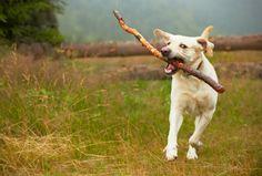 Cane randagio blocca il traffico per salvare un amico  Stray dog stops traffic to save a friend
