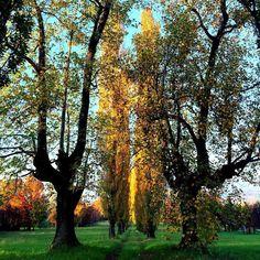 #ruralmood #landscape_lovers #countrylife #walking #naturelovers #autumn2015 #autunno2015 #fallfoliage #foliage #foliageseason #igervarese #provinciadivarese
