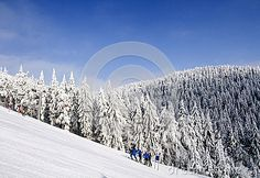 Frosty sunny winter day, snow-covered fir, mountain slope, the Jizera Mountains. Snow Mountain, Winter Day, Czech Republic, Sunnies, Asian, Seasons, Mountains, Landscape, Nature