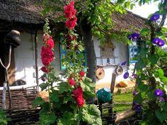 My soul sings for Ukraine Ukraine, Ukrainian Art, Hollyhock, Natural Garden, Perfect World, Small Gardens, Eastern Europe, Garden Inspiration, Planting Flowers