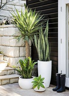 A front garden can be said as a magical garden as this is the path which guests take before they approach you. You can use your front garden to your Patio Plants, Outdoor Planters, Indoor Plants, Outdoor Gardens, House Plants, Succulent Outdoor, Succulent Pots, Pots For Plants, Tall Potted Plants