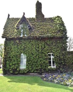 ivy-covered, English cottage