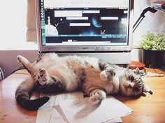 #cat #cats #meow #mao #tabby #tbt #instakitten #instacat #catstagram #TigerRepublic #Didi #furkid #pet #scottishfold #neko #mao #貓 #ねこ #americanshorthair #catlover #catlady #caturday #miao #喵 #喵星人 #kawaii #like4like #follow4follow #mimi #catoftheday #catofinstagram