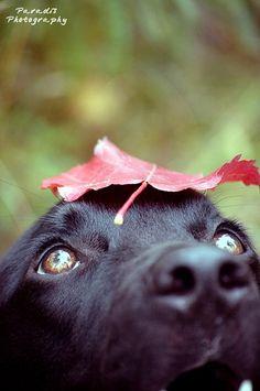 Dog & Leaf