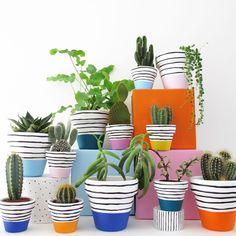 Pink Stripe Plant Pot - 6cm