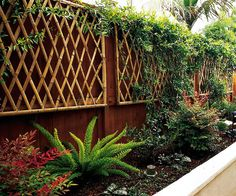 Trellis wall mount. I would like to try this on the side of the old shed, or the back of the gray shed. I have the bamboo!