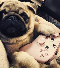 #pug #xbox #puppies