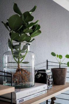 Die 981 Besten Bilder Von Grunes In 2019 Pflanzen Zimmerpflanzen