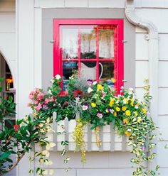 Old-fashioned appeal - Variegated trailers dangle over the edge of this box filled to brimming with cottage favorites including hibiscus, impatiens, pansies and periwinkle.