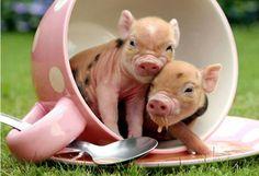 Superbe...  J'adore les tits cochons... ...