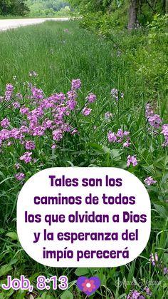 Job, 8:13 - Tales son los caminos de todos los que olvidan a Dios; y la esperanza del impío perecerá.