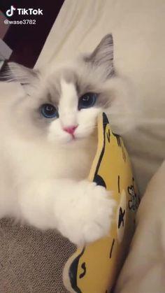 Cute Wild Animals, Cute Little Animals, Cute Funny Animals, Animals And Pets, Funny Cats, Cute Baby Cats, Cute Funny Babies, Baby Kittens, Cats And Kittens