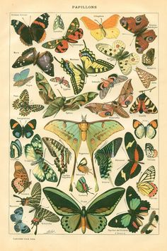 botanical print - moths