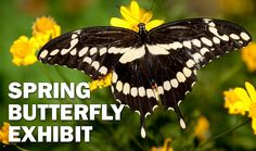 Spring-butterfly-2013_610x360