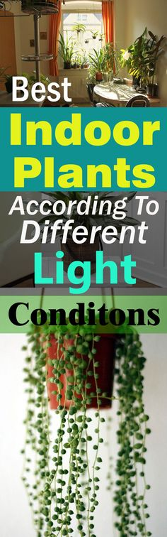 best-indoor-plants-according-to-different-light-conditions2-copy