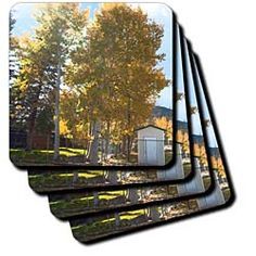 Some tress in Autumn with beautiful yellow leaves Coaster