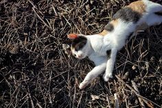 Kittens Cutest, Animal Pictures, Cute Animals, Fox, Kitty, Wordpress, Cats, Pet Dogs, Point And Shoot Camera