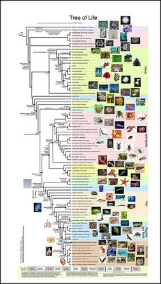 Tree of Life. by Endless Forms Most Beautiful, via Flickr