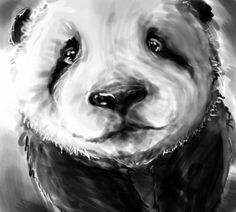 Panda drawing!