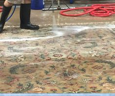 Pet Stain Removal Jupiter Services