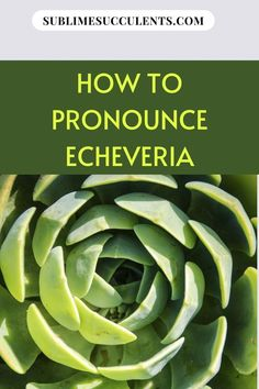 Have you noticed that most succulents include latin names? Sublime Succulents highlights a commonly used name, Echeveria. Find out why using latin names is so important, what is behind the names that make the plants distinguishable. What is not as distinct is that there is more than one way to pronounce Echeveria. So check out our little linguistic guide, it can be interesting and some tidbit to impress your other green-thumbed friends. Learn more… #echeveria #succulentsecheveria… How To Pronounce, Succulent Care, The More You Know, Types Of Plants, Echeveria, Succulents Garden, Amazing Gardens, Houseplants, Green