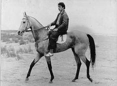 Old photo of an Akhal Teke