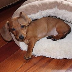 Mornings are always hard to get going.  doxie