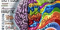 Comment stimuler son cerveau droit Apprendre de nouvelles choses  L'essentiel est de garder son cerveau actif et renouveler ses sources de stimulations. C'est un des éléments clés qui permet de prolonger l'espérance de vie. d'exercer son esprit et le confronter à de nouveaux apprentissages pour nous aider à rester jeune... et instruit!Alors on commence à tous âges à apprendre de nouvelles choses. L'excuse « Je suis trop vieux! » ne tient pas la route.