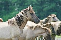 Animals, Horses, Wild Horses