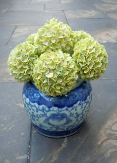 The Shellatier Collection by Karen Robertson - Cay cay shell viburnum in blue and white container.