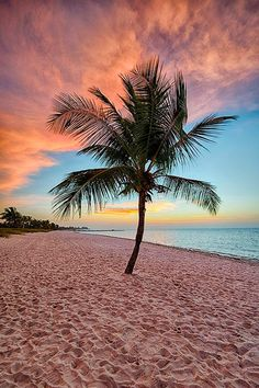 Beach Discover Key West Coconut Tree at Sunrise on Smathers Beach - Available Sizes: