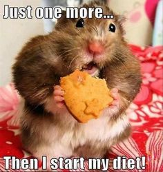 funny diets, new years resolutions