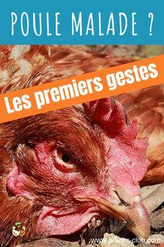 Chicken Runs, Rooster, Outdoor, Club, Voici, Taupe, Zen, Gardens, Chicken Coop Signs