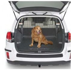 Genuine 2012-2013 Subaru Outback Dog Guard/Compartment Seperator Amazon Price: N/A (as of January 1, 2017 10:21 am - Details). Product prices and availability Read  more http://dogpoundspot.com/dog-luxury-store-778/  Visit http://dogpoundspot.com for more dog review products