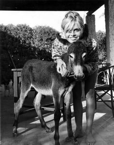Brigitte with a donkey she adopted while on location for Les Bijoutiers du clair de lune, 1957. The donkey was quite sick and BB kept the animal in her rented house where she nursed it back to health.
